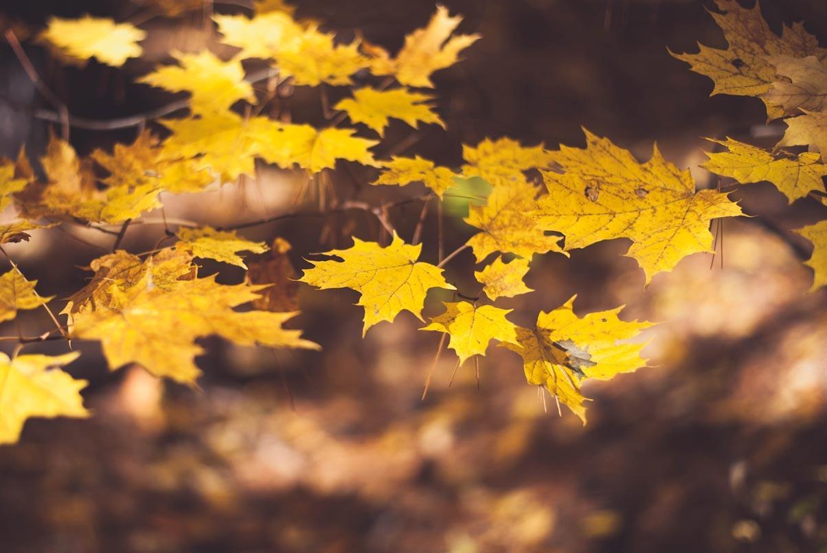 Осенняя АКЦИЯ — скидки от 15% на материал VentiFlex!